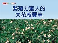 繁殖力驚人的大花咸豐草 [有聲書]
