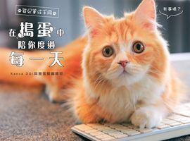 在搗蛋中陪你度過每一天的:貓奴教養守則