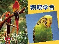 鸚鵡學舌 [有聲書]