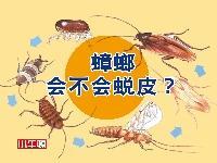 蟑螂會不會蛻皮? [有聲書]