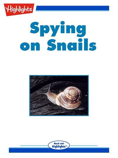 Spying on snails [有聲書]